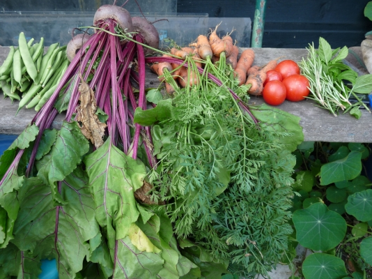 Excitement grows for Allotment Fortnight
