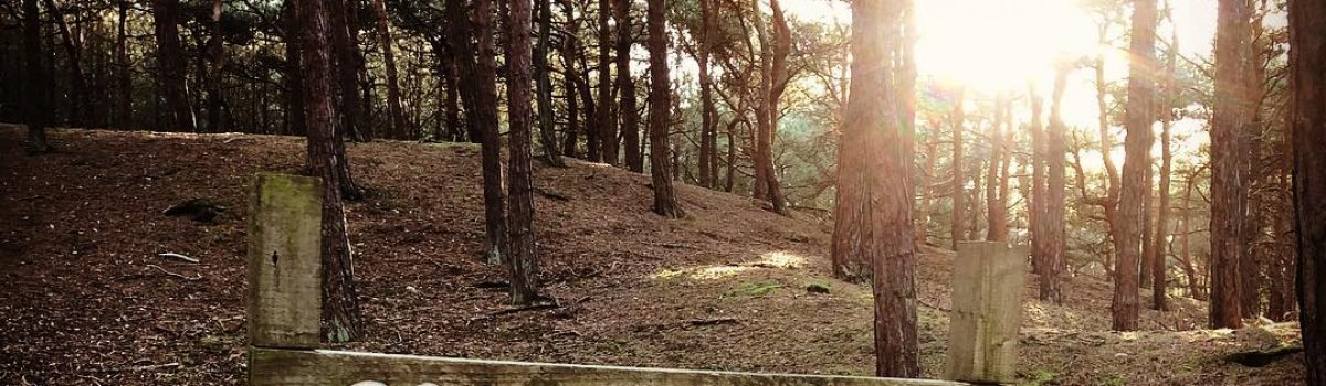 Take a stroll through Formby Pine Woods in #ETW2018