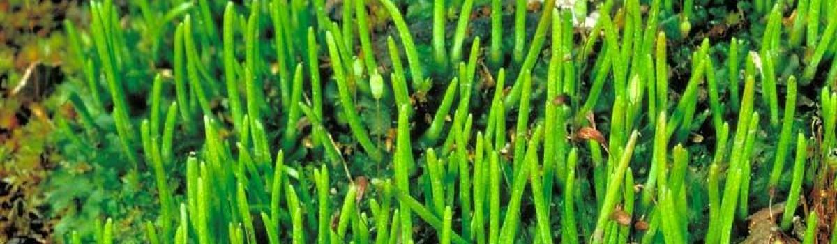 Make the moss-t of Ainsdale Bryophytes talk
