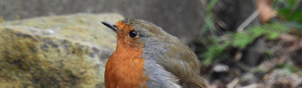 Join the Big Garden Birdwatch from the comfort of your home