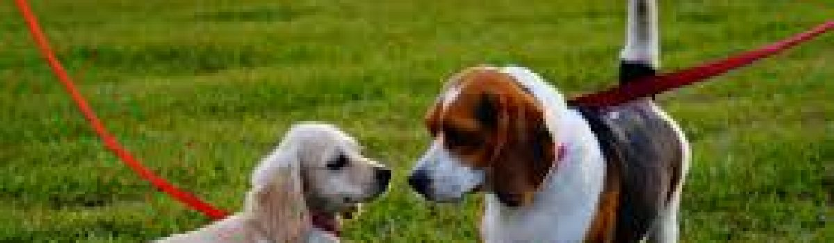Dog Control Public Space Protection Order approved by Sefton Council