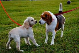 Two dogs in a park on leads