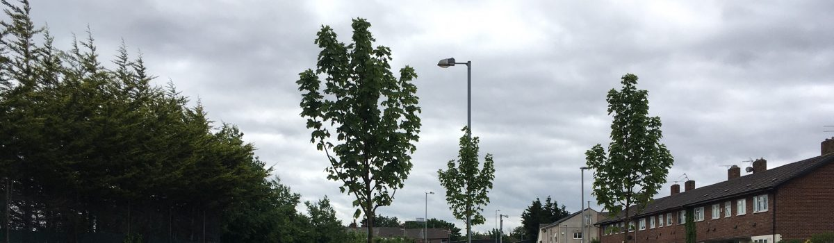 Council's Green Sefton service takes a bough after tree-mendous planting season