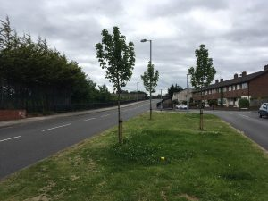 Three new trees planted by Sefton Council