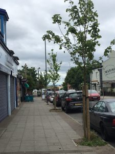 New trees planted on South Road, Crosby