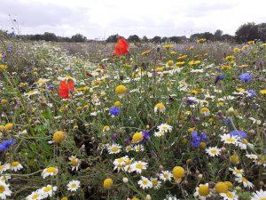 Rimrose Valley Wildflower Meadow