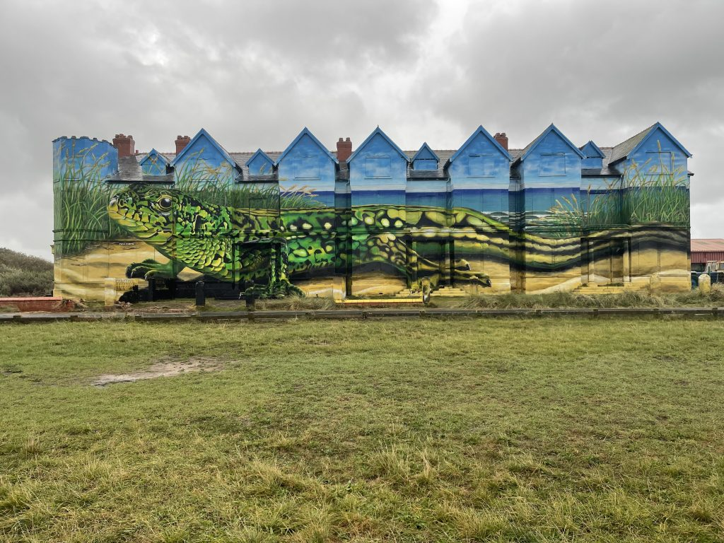 Huge finished sand lizard painting by Paul Curtis on the side of Ainsdale's Toad Hall